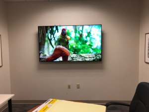 Conference Room TV